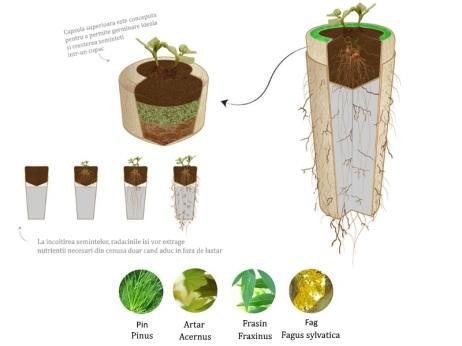 urna-bios-detalii-copaci
