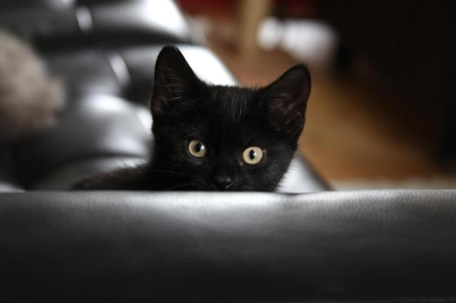 black_kitty_little-cat-hd